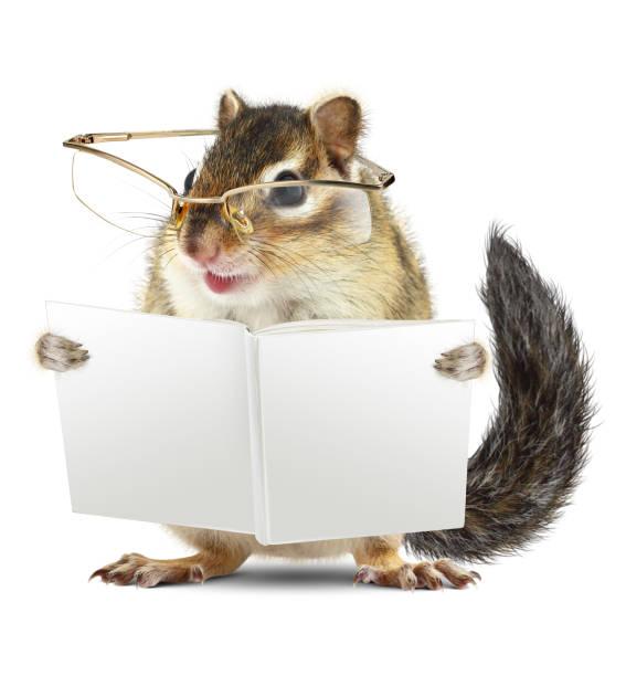 lustige tier streifenhörnchen mit brille lesen buch joh weißen hintergrund - humor bücher stock-fotos und bilder