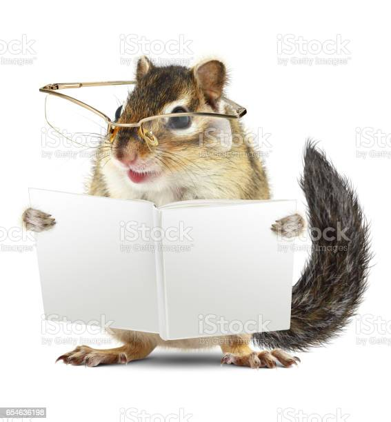 Photo of Funny animal chipmunk with glasses reading book jn white background
