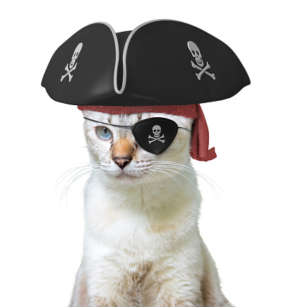 istock Funny animal costume of a cat pirate captain wearing a tricorn hat and eyepatch with skulls and crossbones, isolated on a white background 849722068