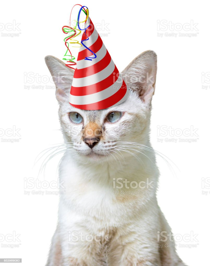 Funny Animal Party Concept Of A Cat Wearing Birthday Hat Isolated On White Background