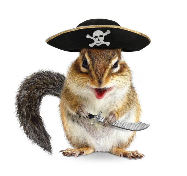 Funny animal pirate, chipmunk with hat and sabre stock photo