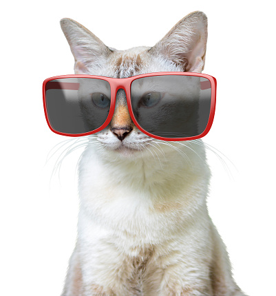 istock Funny animal portrait of a cool cat wearing big oversized red sunglasses, isolated on a white background 849025416