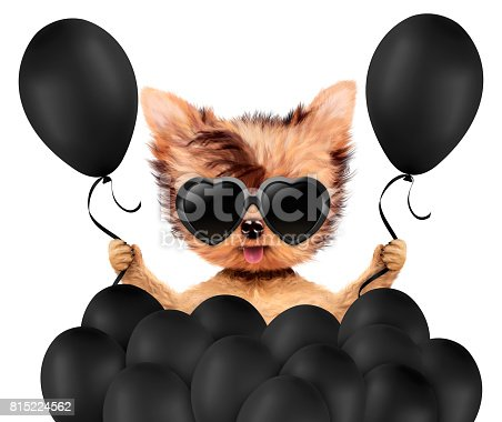 815229514 istock photo Funny animal surrounded by ballloons 815224562