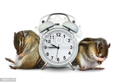 istock Funny animals chipmunks wakeup with ringing clock on white background 655044708