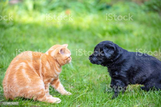 Funny animals little puppy and kitten playing on the grass in the picture id1078526302?b=1&k=6&m=1078526302&s=612x612&h=0o5npuhso8zsmluifo2g3b8vvgjworgqxcpqzmziixa=