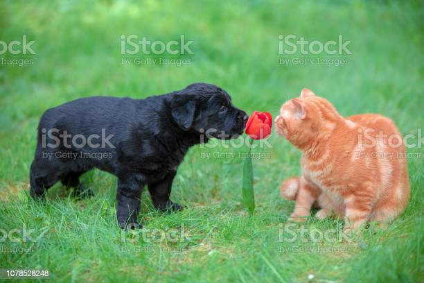 Funny animals little puppy and kitten playing outdoors in the summer picture id1078528248?b=1&k=6&m=1078528248&s=612x612&h=rhtxc1pktsdbin0yhqfkeosmpm9 dozsedbej7cdpke=