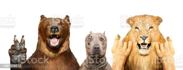 Funny animals showing gestures isolated on white background picture id1097009312?b=1&k=6&m=1097009312&s=612x612&h=fh5jp8wpv4fzzht25zfvp7opcnfc rerlzyggznfs00=