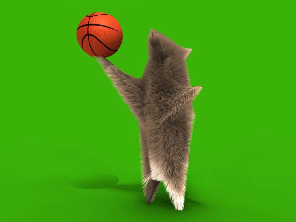 Funny basketballer squirrel picture id819977444?b=1&k=6&m=819977444&s=612x612&w=0&h=a1qguxcdm2fwrufpwcikbvjlrbtd2liv1fra3kz0uzi=