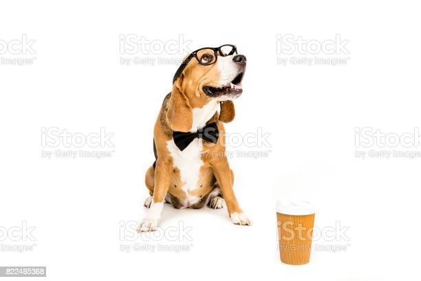 Funny beagle dog in eyeglasses and bow tie sitting near disposable picture id822465368?b=1&k=6&m=822465368&s=612x612&h=jf tsfy4v52ztihvmicrxby2c1tuccelc8439rrqzvg=