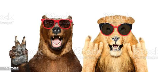 Funny bear and lion in sunglasses showing gestures isolated on white picture id1154370662?b=1&k=6&m=1154370662&s=612x612&h=r5dj8tl x7pcm sdktlptpp2ateywxnaeadgr ddzrg=