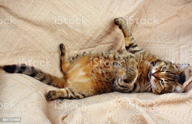 Funny beautiful cat picture id684151668?b=1&k=6&m=684151668&s=612x612&h=n i1pjbqdbuskiek3x4rkeiphkxgubfny2eetcmld 8=
