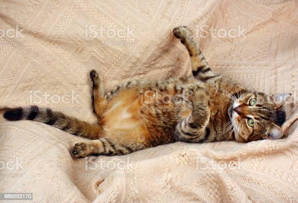 Funny beautiful cat picture id686553170?b=1&k=6&m=686553170&s=612x612&h=e9jhoukqhh8qtaf10hfdd4pgetohiospkwl9t1su9rg=