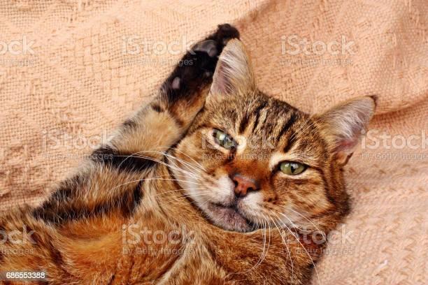 Funny beautiful cat picture id686553388?b=1&k=6&m=686553388&s=612x612&h=s0hv8m5ibp gqiugdwa4zhzj ucniioaufayrvxeq5w=