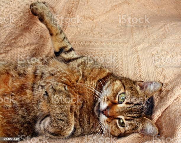 Funny beautiful cat picture id686553442?b=1&k=6&m=686553442&s=612x612&h=ce2fmueuee8ml7w5ndclwswe4jjjn2qrc6brnh7ee0w=
