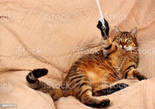 Funny beautiful cat picture id686553516?b=1&k=6&m=686553516&s=612x612&h=is4ylyct4fmtvkhwi7zdvgwpim0o9pah5tya lg8jb0=