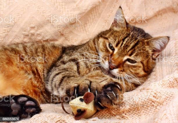 Funny beautiful cat picture id686553674?b=1&k=6&m=686553674&s=612x612&h=t5urpow6wf2urbdbrd3g9ivbvrge5q v5tu daqrezk=
