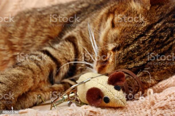 Funny beautiful cat picture id686553780?b=1&k=6&m=686553780&s=612x612&h=owy6wrecud34ecscw5yilqqv9xpzywwk3hx3kqsxuoy=
