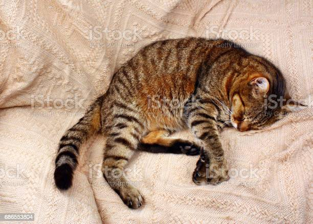 Funny beautiful cat picture id686553804?b=1&k=6&m=686553804&s=612x612&h=hs4r1ykttvewvb2sse5xmcgjgrc67maaqbfmgzetyaw=