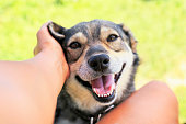istock funny beautiful dog crouched his face with pleasure from the hands of a man scratching behind his ear 1041987204