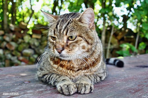 istock Funny big stuffed cat 498443355