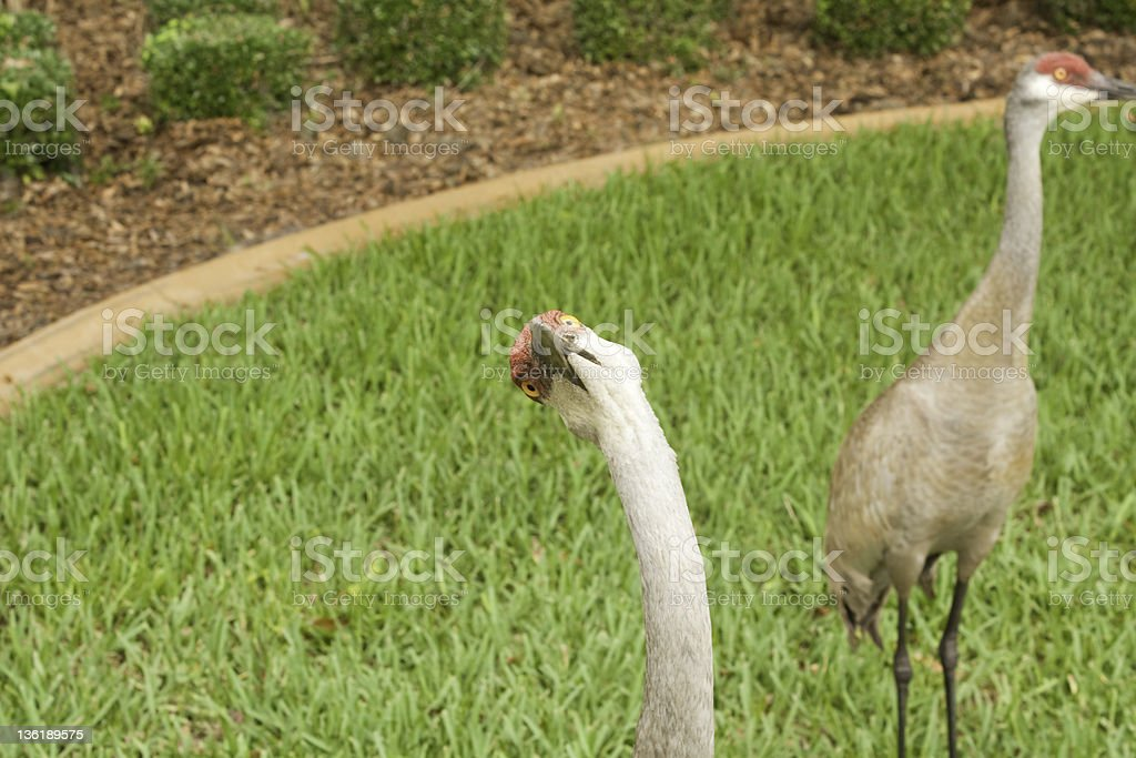 Funny Bird stock photo
