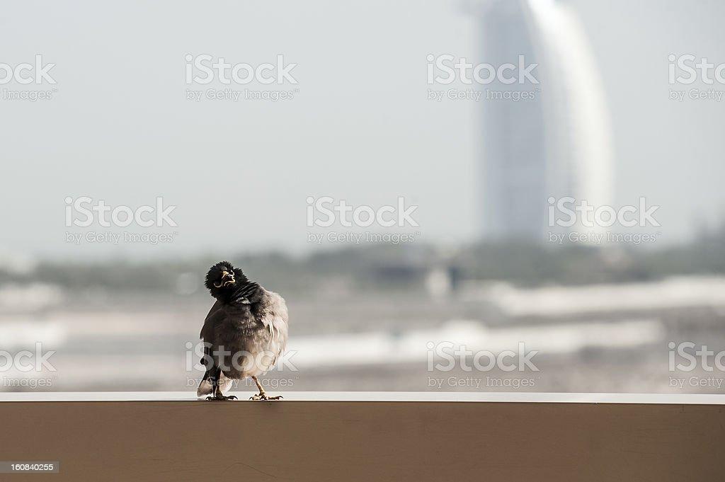 Funny Bird royalty-free stock photo