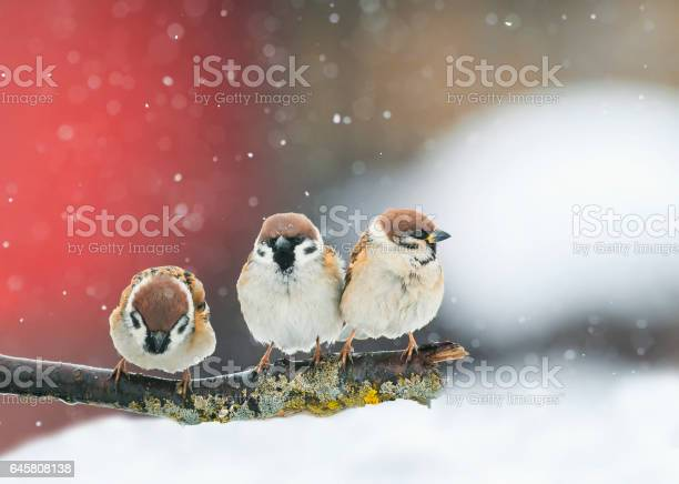 Funny birds funny arguing in a park during a snowfall picture id645808138?b=1&k=6&m=645808138&s=612x612&h=ykpteb0ig iwcgt4 j0t0scu7vawmti9jnkw jjo1um=
