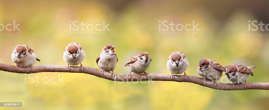 funny birds sitting on a branch  opened their beaks​​​ foto