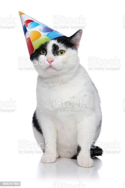 Funny birthday cat with cap sliding off head picture id956297884?b=1&k=6&m=956297884&s=612x612&h=ioepjfr6k8zhljm9x4zvyksmli34jih1qhdipdaskgs=