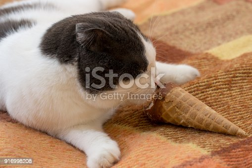 958492394 istock photo Funny black and white cat eating ice cream cone lying on the rug 916998208