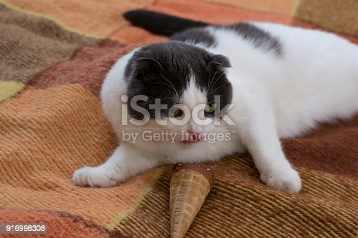 958492394 istock photo Funny black and white cat eating ice cream cone lying on the rug 916998308