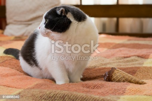 958492394 istock photo Funny black and white cat with ice cream cone on the rug 916998340