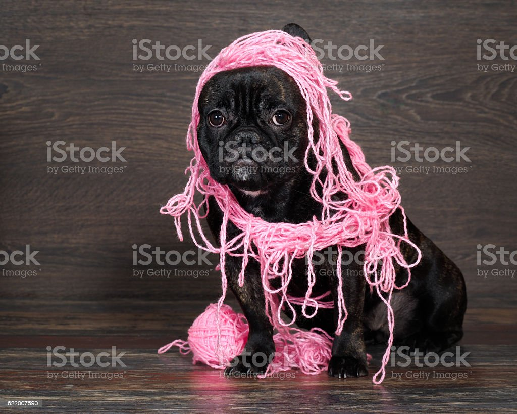 Funny black dog in pink intricate Threads стоковое фото