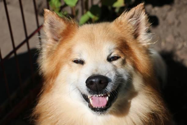 Lustiger brauner Elo-sitzt im Garten und lockert bis zur Kamera und lächelt – Foto