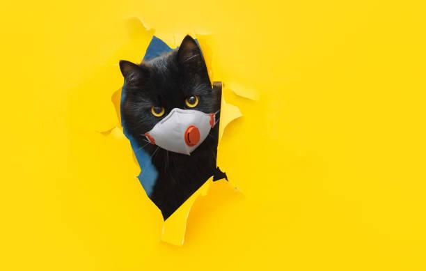 een grappige insect-eyed zwarte kat in een witte beschermende medische maskerademhalingspeeks uit een gescheurd gat in geel document. het concept van quarantaine, coronavirus, covid-19. kopieer ruimte. - tears corona stockfoto's en -beelden