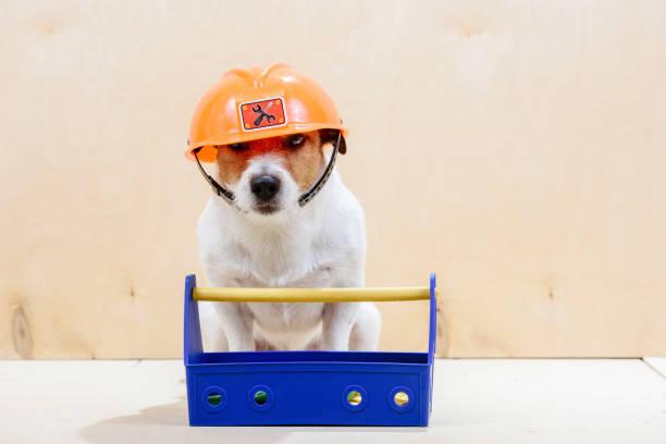 lustige baumeister mit toolbox orange helm tragen - hundezubehör diy stock-fotos und bilder