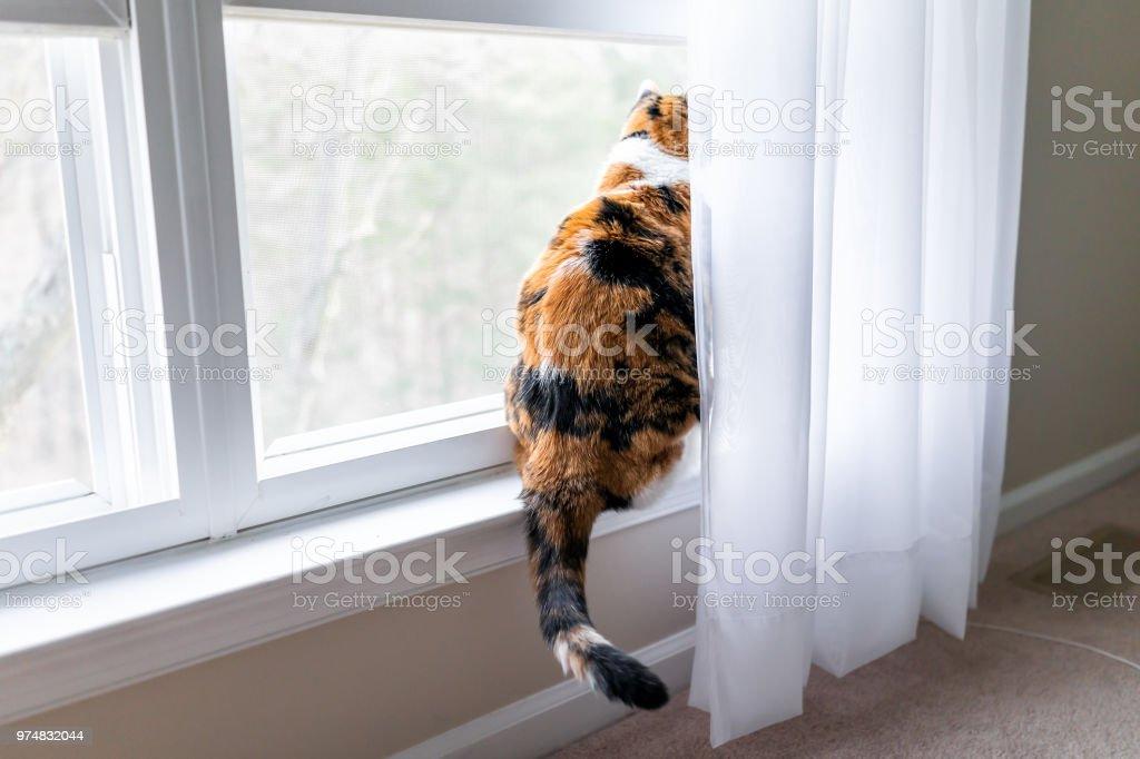 Lustige Calicokatze Auf Der Fensterbank Fenster Fensterbank Suchen
