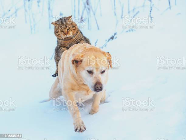 Funny cat and dog are best friends cat riding the dog outdoors in picture id1128305981?b=1&k=6&m=1128305981&s=612x612&h=qozny2tkc7iprb0sadlbygqagolw00fhnxrklrlbm w=