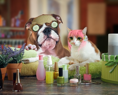 Funny cat and dog beauty salon. Spa treatments for animals