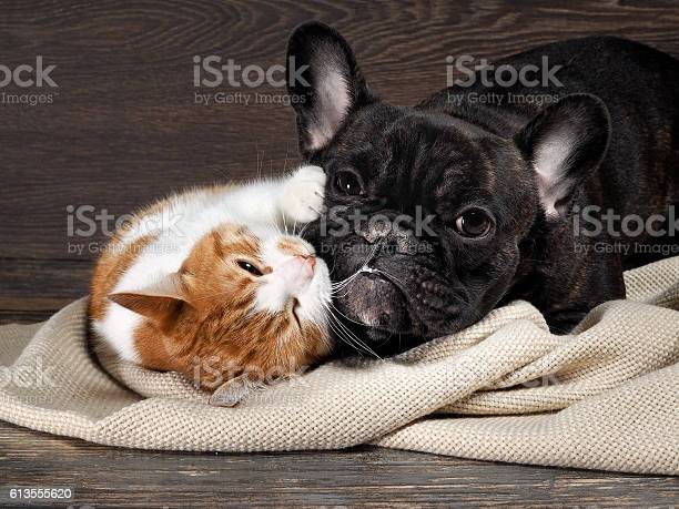 Funny cat and dog lying on the floor picture id613555620?b=1&k=6&m=613555620&s=612x612&h= 5pikdv1ahvkt0anthb5dkuik7ihvmzq7wltus8gbgy=