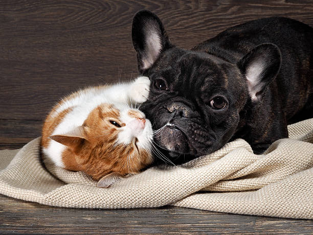 Funny cat and dog lying on the floor picture id613555620?b=1&k=6&m=613555620&s=612x612&w=0&h=pv tcr6ky9tsbsvbu uwxbqd7r4bbhgvrdo5zq2vkiu=