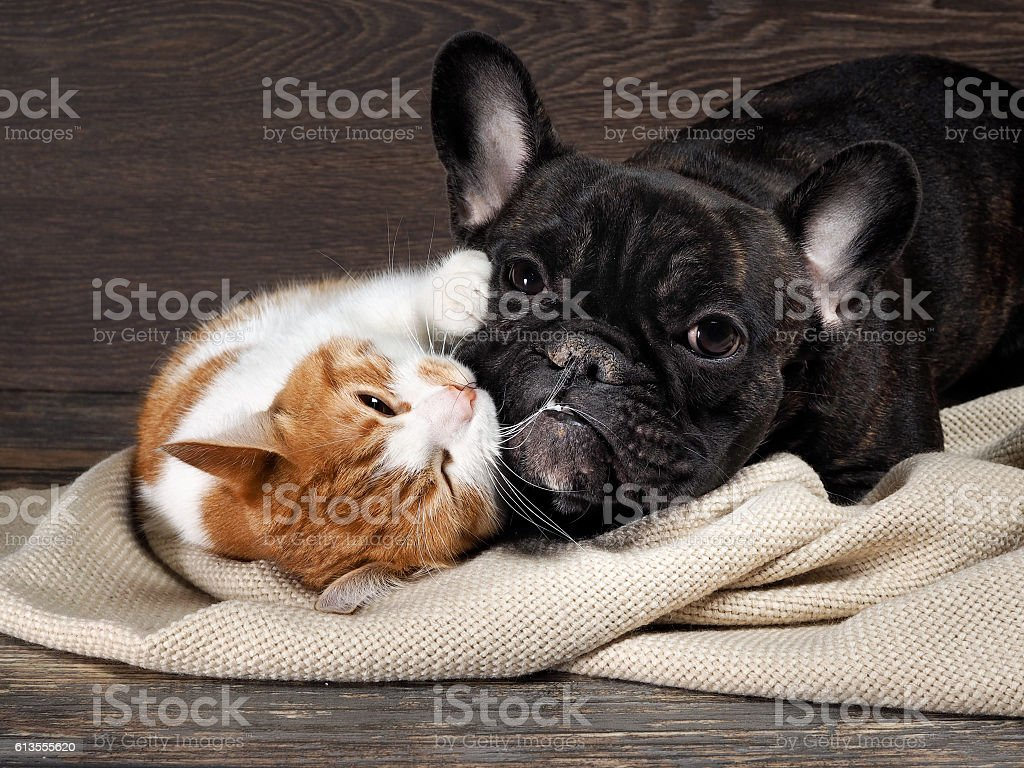 Funny cat and dog lying on the floor, stock photo