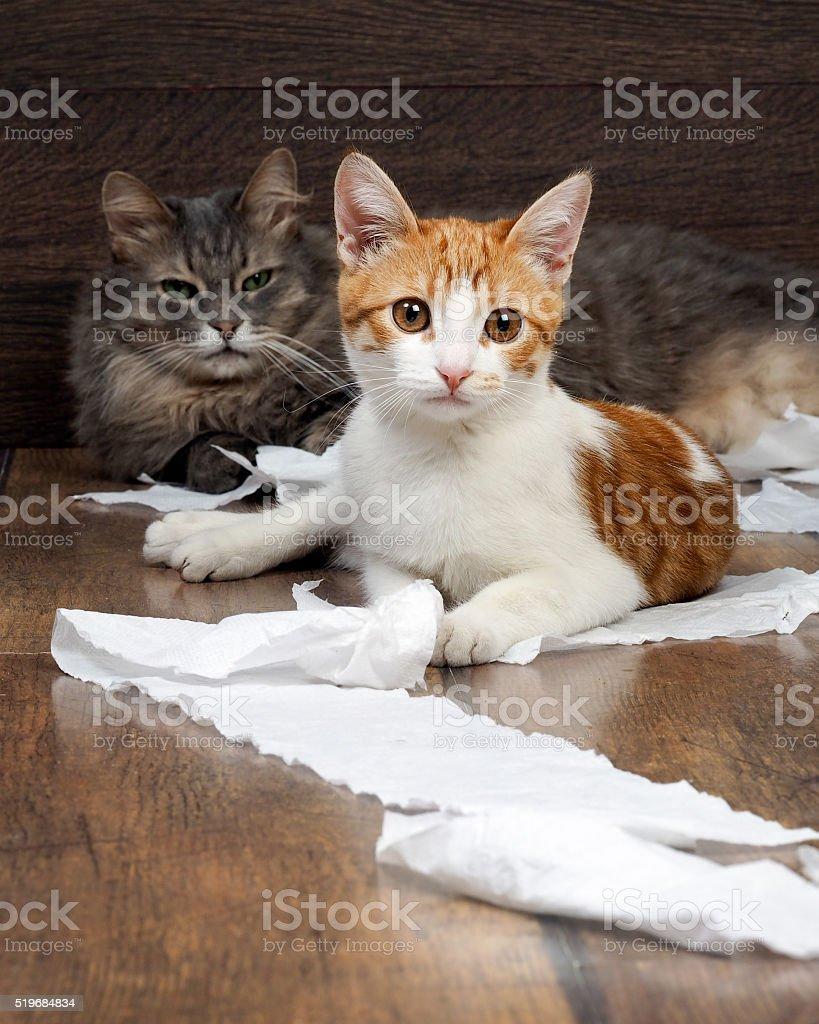 Divertente Gatto E Bel Gattino Giocando Con La Carta Igienica