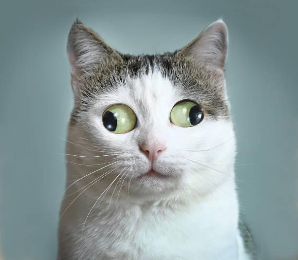 lustige katze bei augenärztin appointmet - katzenschrank stock-fotos und bilder