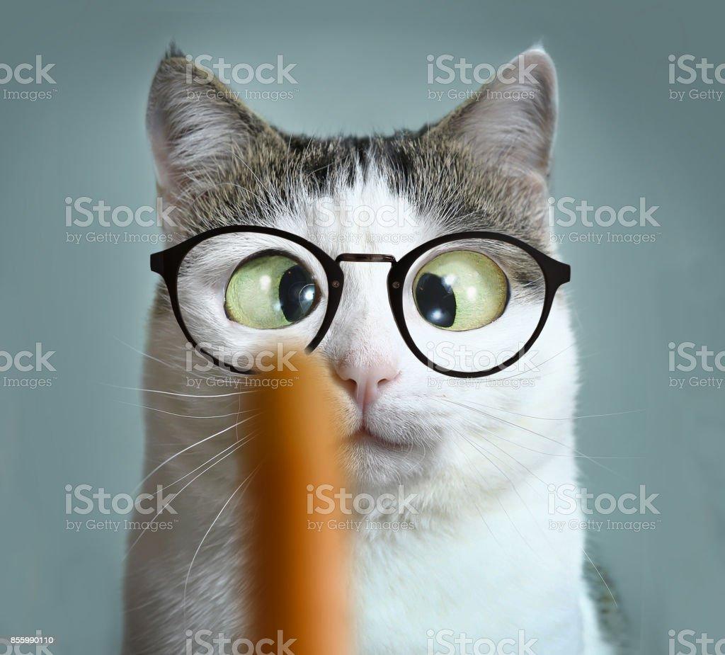 funny cat at ophtalmologist appointmet stock photo