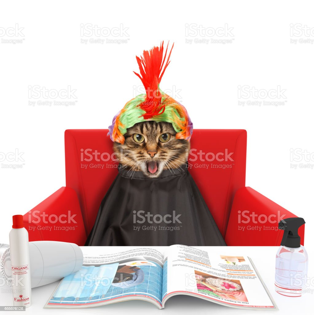 Funny cat at the hairdresser. In a beauty salon - foto stock