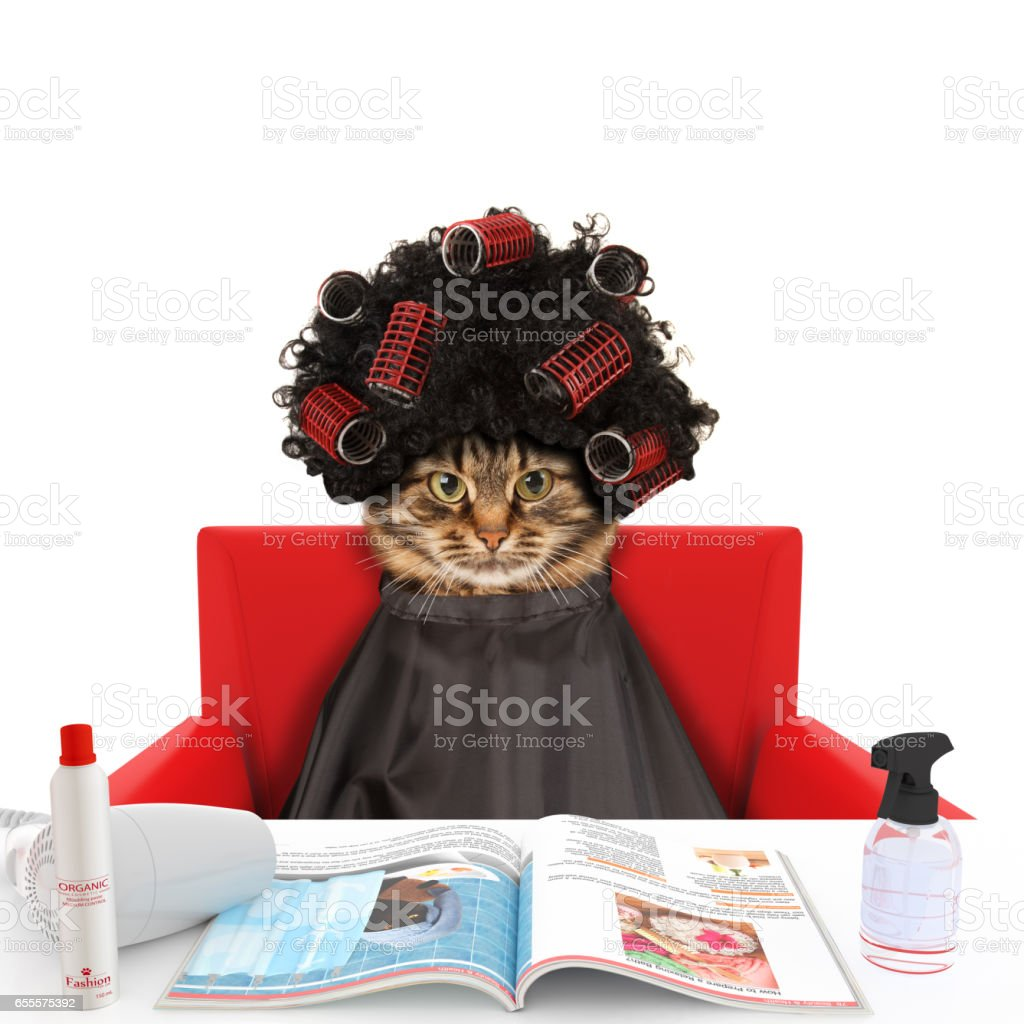 Funny cat at the hairdresser reading a magazine on white background. In a beauty salon. - foto stock