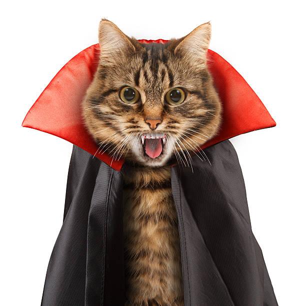 funny cat celebrates halloween - graf dracula stock-fotos und bilder