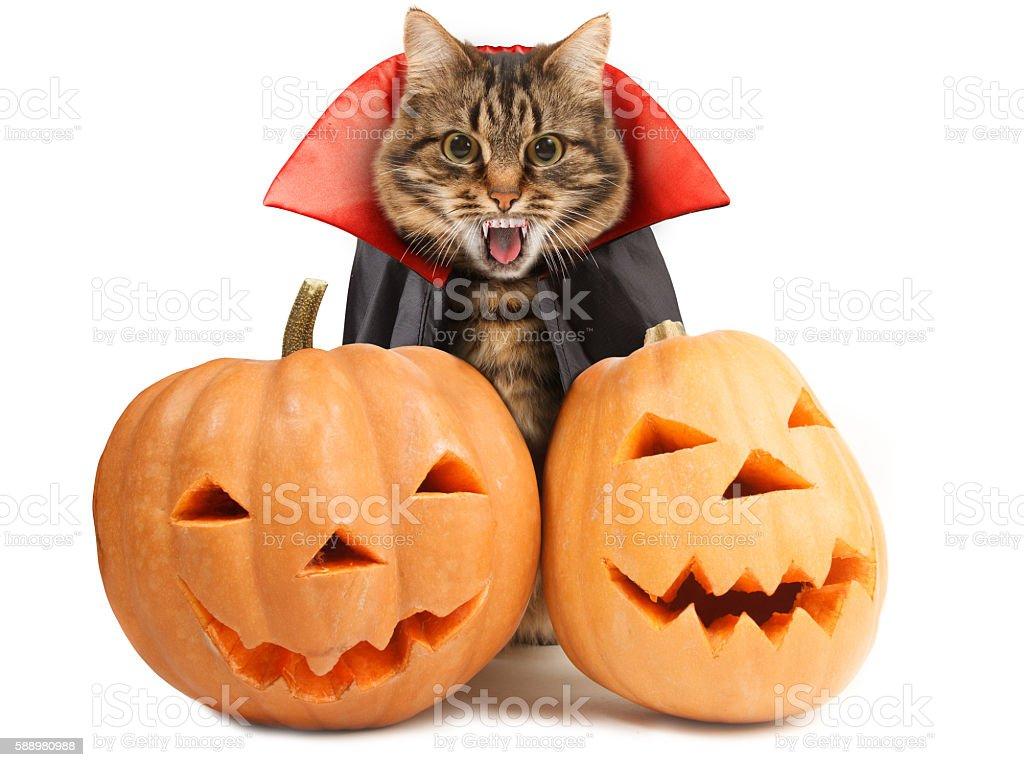 Funny cat celebrates Halloween stock photo