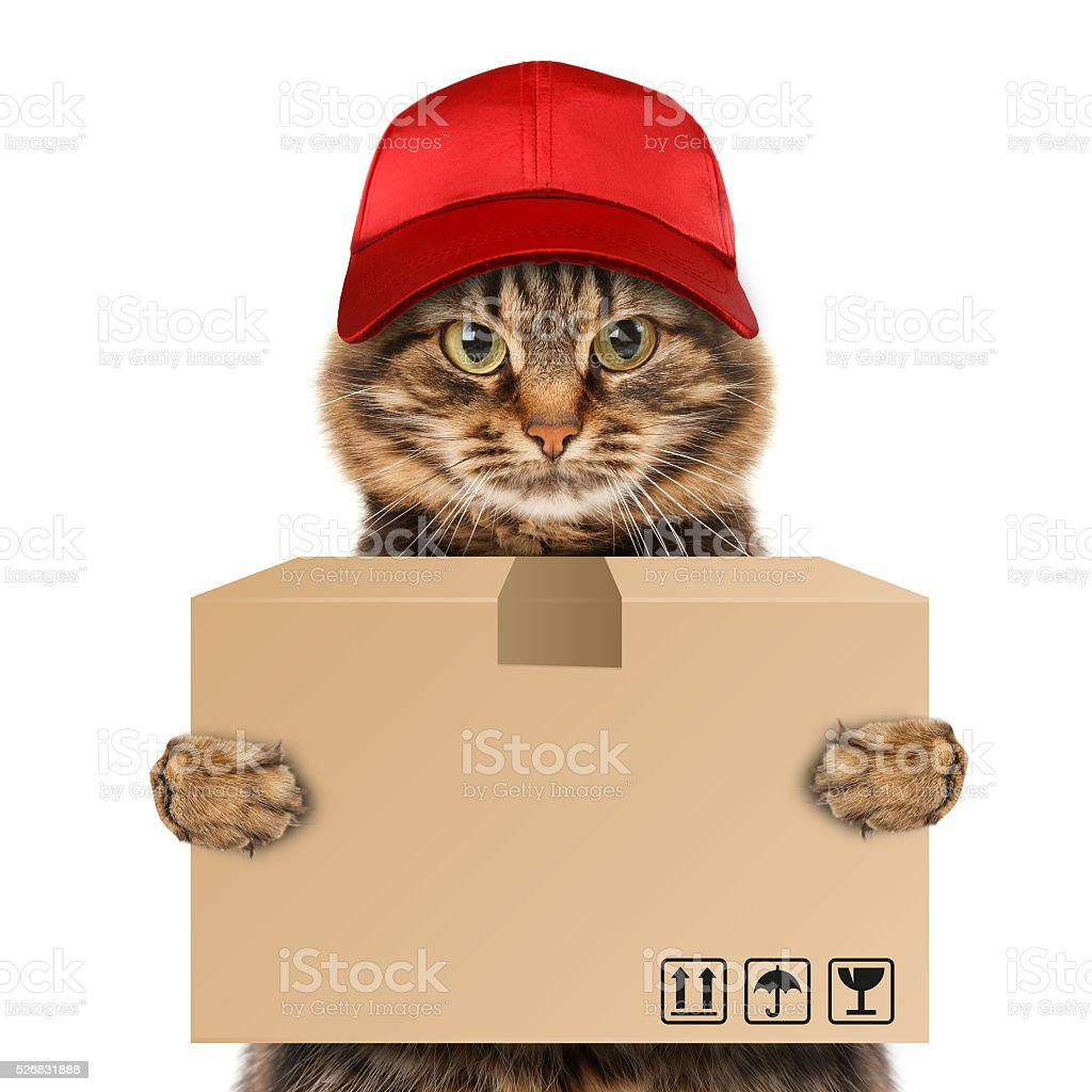 Funny cat - delivery service. stock photo
